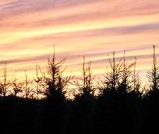 Treeline at dusk